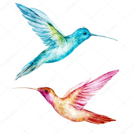 watercolor colibri bird stock vector 169 zeninaasya 70638397