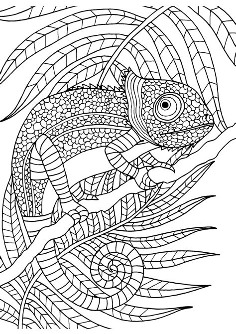 coloring pages for adults chameleon chameleon adult colouring page colouring in sheets art