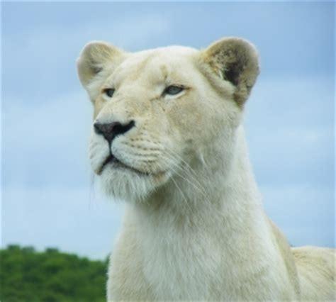 leonessa web leonessa scaricare foto gratis