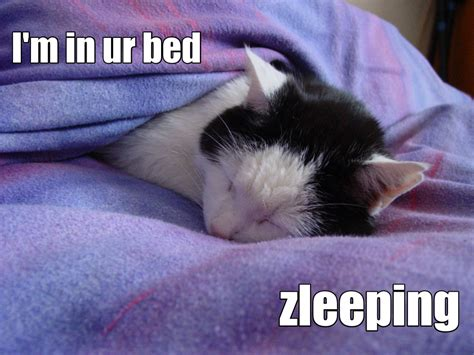 Lol Cat Meme - lolcat jpg