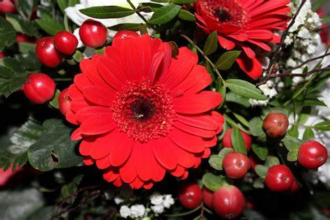 gambar menanam daun bunga merah lukisan ilustrasi