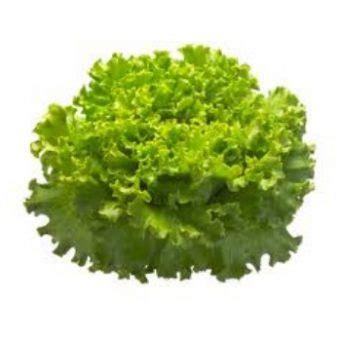 Spesial Benih Selada Lettuce Rijk Zwaan jual benih selada lollo bionda hijau locarno rijk zwaan isi 100 pil