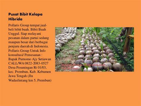 Bibit Kelapa Hibrida Jawa Tengah jual bibit kelapa hibrida di bali harga bibit kelapa