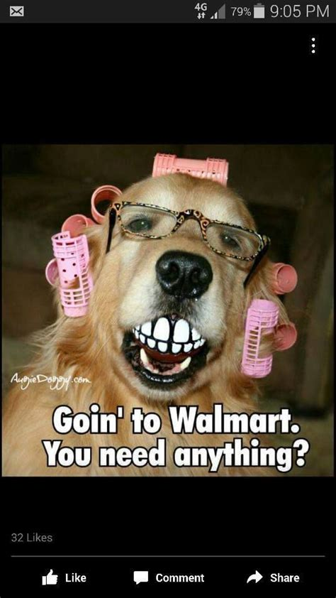 Rude Friday Memes - going to walmart funny dog meme http jokideo com