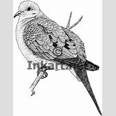 Mourning Dove (...