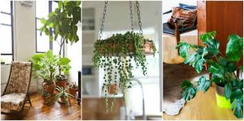Indoor Small Plants 15 best indoor plants good inside plants for small space