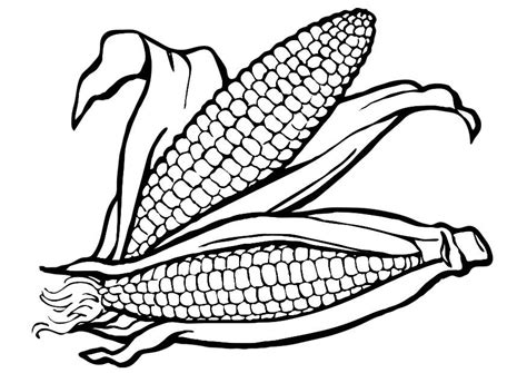 corn on the cob coloring page coloring pages