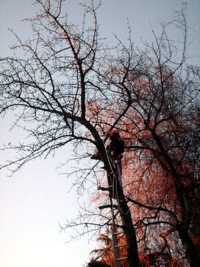 Baum Richtig Fällen 4547 by Baum F 228 Llen 187 Gartenbob De Der Gartenratgeber