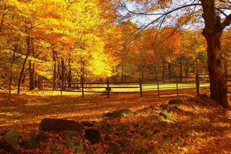 gold landscape autumn trees foliage