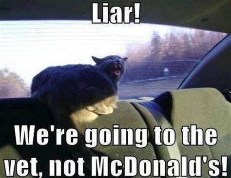Vet Memes - quot liar we re going to the vet not mcdonald s quot