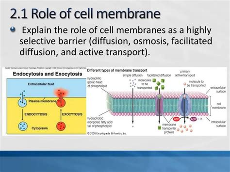 mcas biology review biochemistry  cell biology