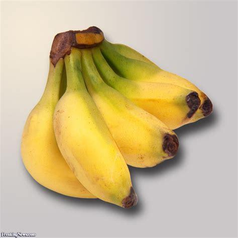 tiny banana tiny bananas