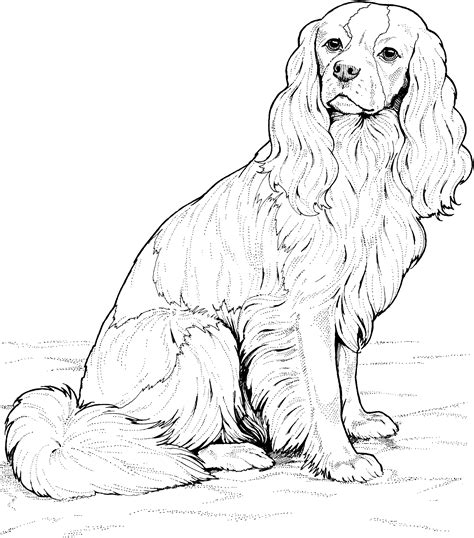 coloring book pages dog breeds dog breed coloring pages
