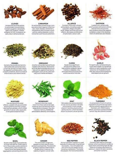 herbs chart healthy eating 101 improve your fat loss and muscle gain