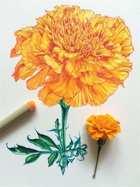 marigold paint 335 best images about afrik 225 ny marigold tegetes měs 237 čky