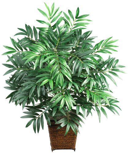 aa palm the free encyclopedia 17 best ideas about bamboo palm on best indoor