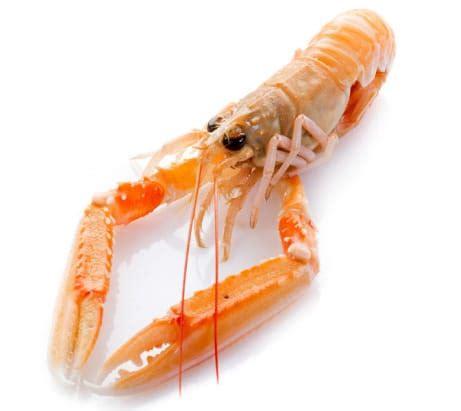 Lobster Chair Temps De Cuisson Des Langoustines Comment Les Faire Cuire