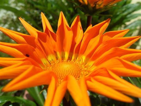 ramos de flores hermosas ramos de flores bellas related keywords ramos de flores