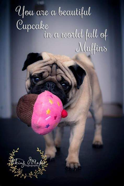 Pug Birthday Meme - 1000 ideas about pug cupcakes on pinterest pug cake