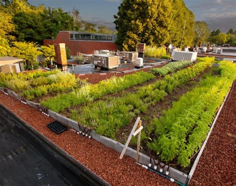 rooftop vegetable gardens points to remember while you make roof top vegetable garden