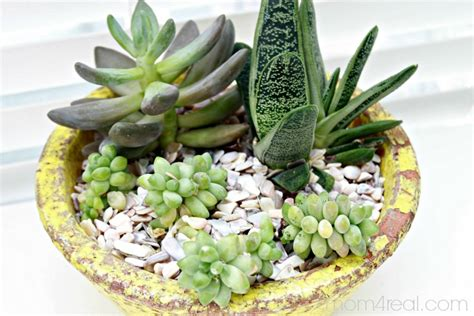 How To Propagate A Succulent Cookie And Kate - ideas for planting succulents the graphics