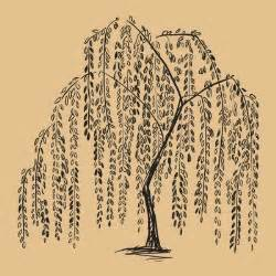 amazing weeping willow tree tattoo design ideas and meaning
