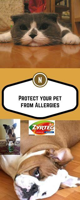 cetirizine dosage for dogs 17 best images about cat food reviews recipes on pets cat food and