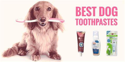 best toothpaste for dogs 5 best toothpastes sentry enzymatic tartar diy etc