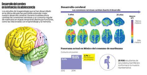 cerebro adolescente eluniversal com mx el desarrollo cerebral y los efectos