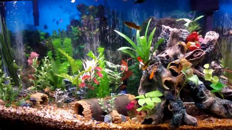 natural fish tank decoration ideas youtube freshwater community aquarium fish wallpapers gallery