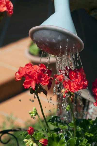 watering outdoor potted plants   water container