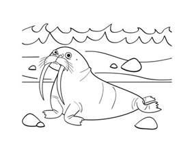 free printable walrus coloring pages kids