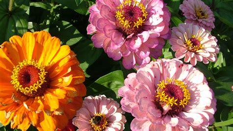 best wallpaper hd 1080p free download 1366 215 768 flowers