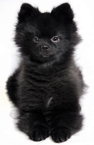 cutest dog breeds herinterestcom