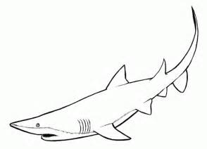 sea creature coloring pages shark