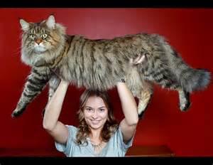 big house cats democratic underground