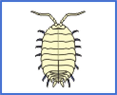 how many legs does a bed bug have the learning zone bug i d