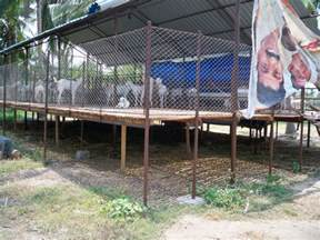 yarasool goat farm developer consultant goat shed plans
