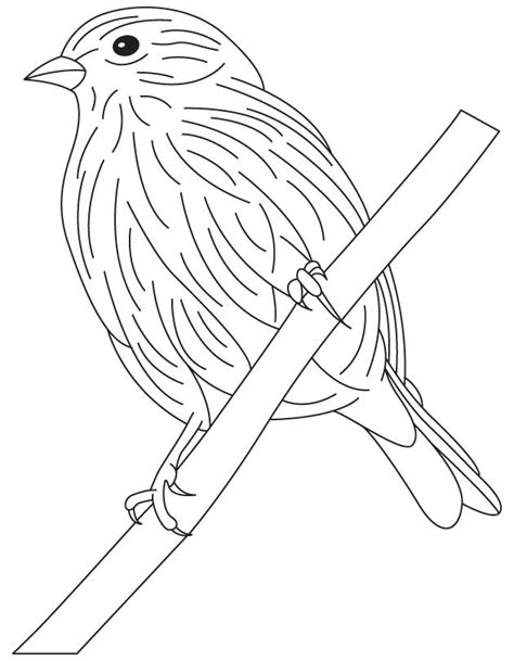goldfinch bluebird coloring pages print coloring