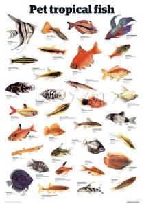 types of aquarium fish pet fish types best tropical fish for a community tank 2017 fish tank maintenance