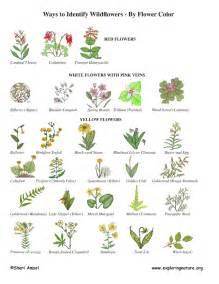 Garden Flower Identification Wildflower Identification By Color Wildflower Id Book For Wildflowers