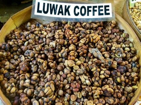 Kopi Luwak: The Cruelty Behind the World's Most Expensive Coffee   Perfect Daily Grind