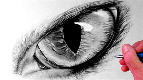 eye drawing how to draw a cat eye