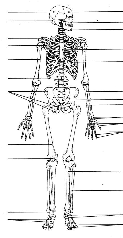 labeled human skull diagram printable human skeleton