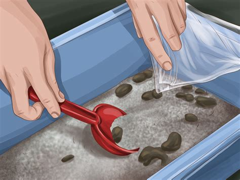 how to litter your how to make a litter box for your rabbit 7 steps with pictures