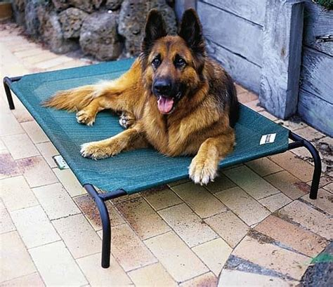 coolaroo dog bed large dog bed replacement cover by coolaroo