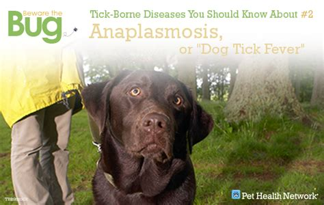 anaplasmosis in dogs 6 tick borne diseases you should about