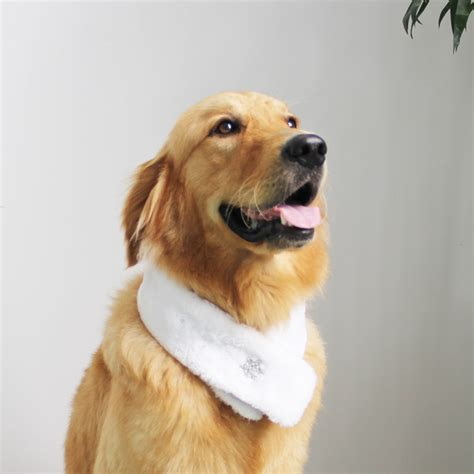 golden retriever puppy bandana golden retriever collar promotion shop for promotional golden retriever collar on