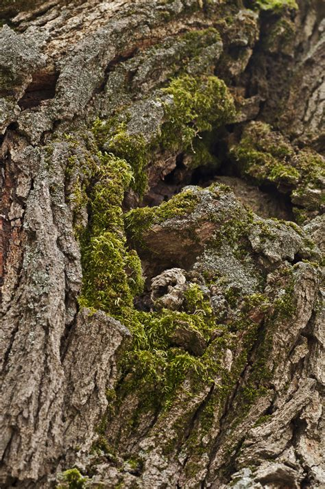 moss covered old tree s trunk by petertakacs on deviantart