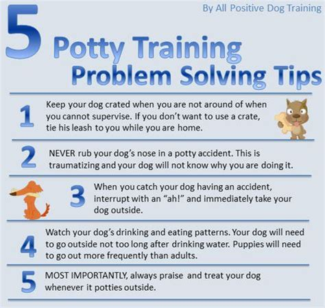 how to potty train a house dog post title poos and doodles